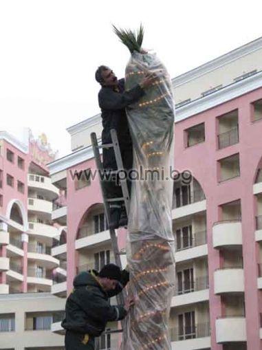 Светещи маркучи за отопление на палми