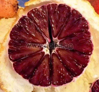 Citrus sinensis 'Taroco Meli', Портокал сорт Тароко от Палм Център, Ботаническа градина - Пловдив