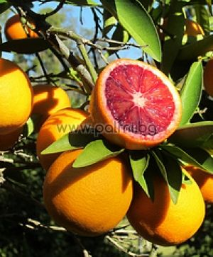 Blood Orange Moro