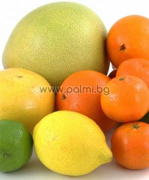 Citrus from the list to add to the order