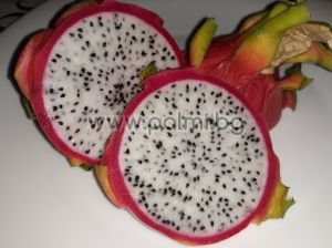 Dragon Fruit, Pitaya