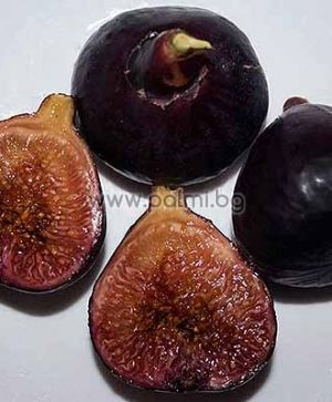 Fig variety Black Donov